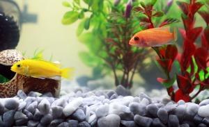 fish-961953_1920